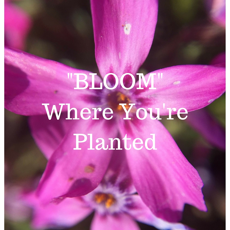 Achieve the Ultimate Work, Life, and Family Balance - Bloom Where You're Planted
